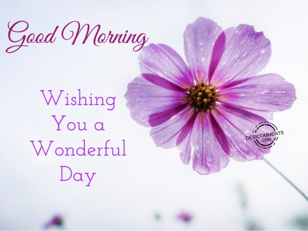 Good Morning Wishing You A Wonderful Day