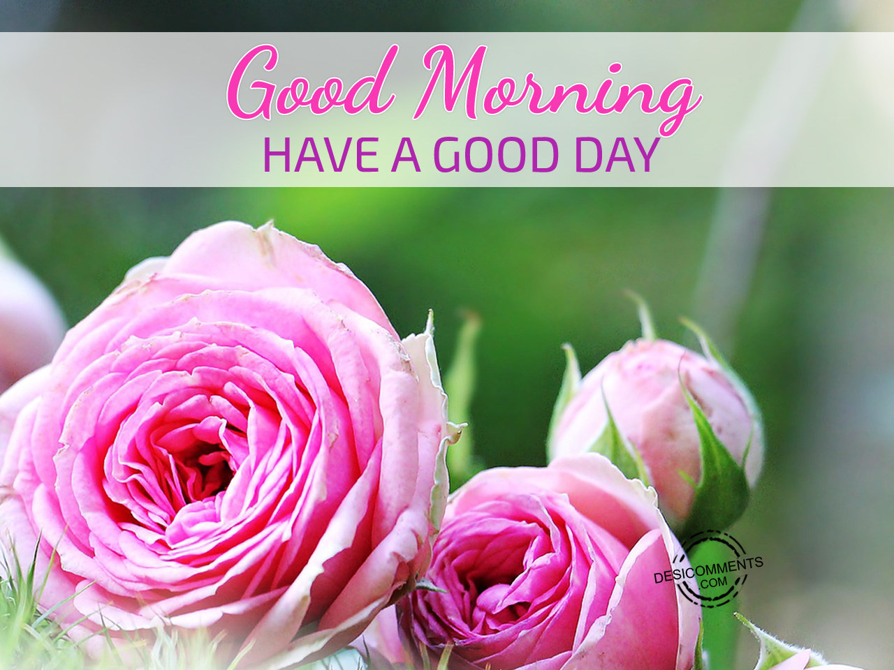 Have A Good Day Morning - DesiComments.com Have A Good Day