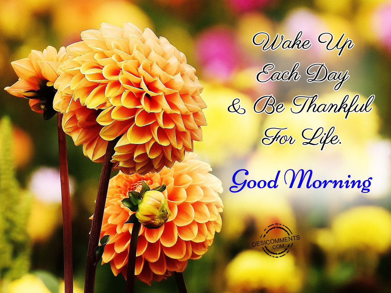 Good Morning Pictures And Images : Good morning be thankful for life inspiring quotes and