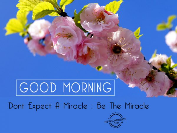 Do Not Expect A Miracle Be The Mriracle