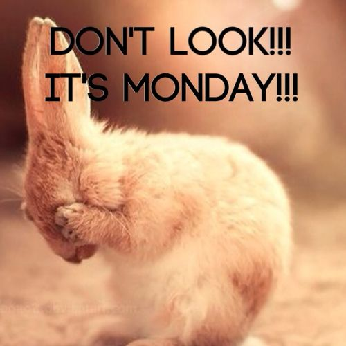 Funny Happy Monday Meme : Its monday images reverse search