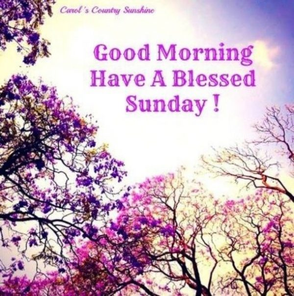 Good Morning Have A Blessed Sunday !