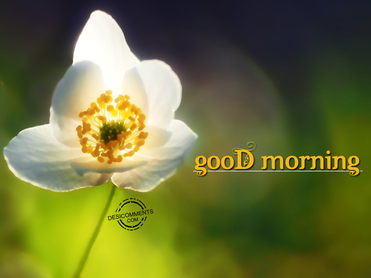 Good morning pictures images graphics for facebook for Good comments on pic