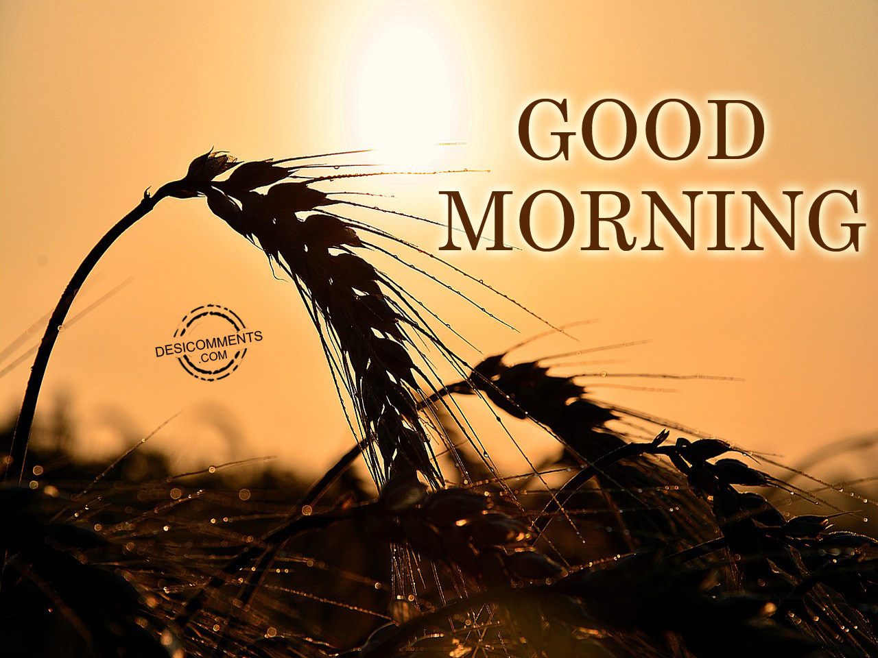 Good Morning Pictures And Images : Good morning pictures images graphics for facebook