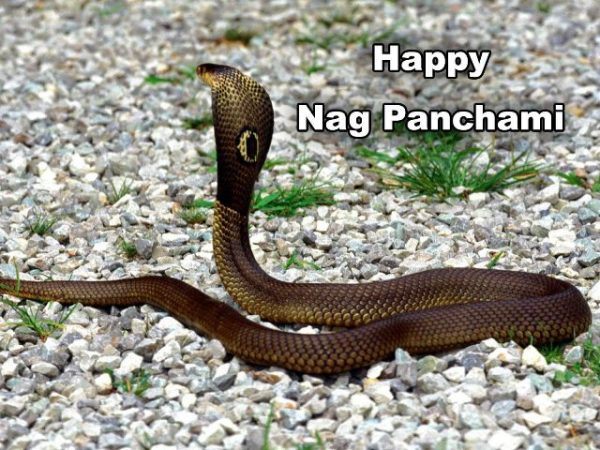 Picture: Happy Nag Panchami Pic