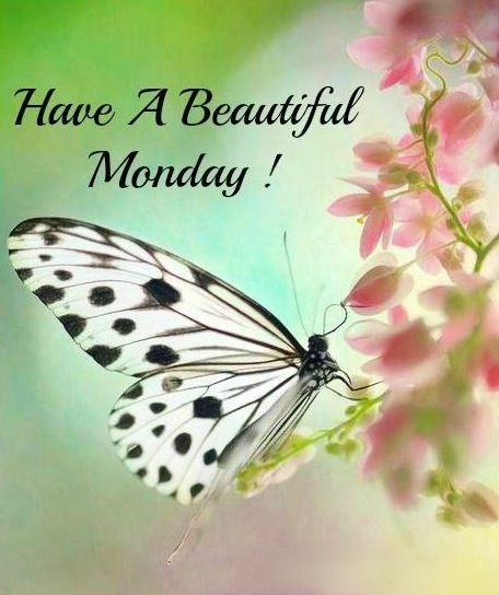 Have a beautiful monday !