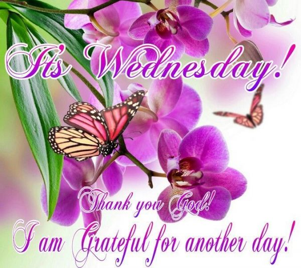 It's Wednesday Thank You God