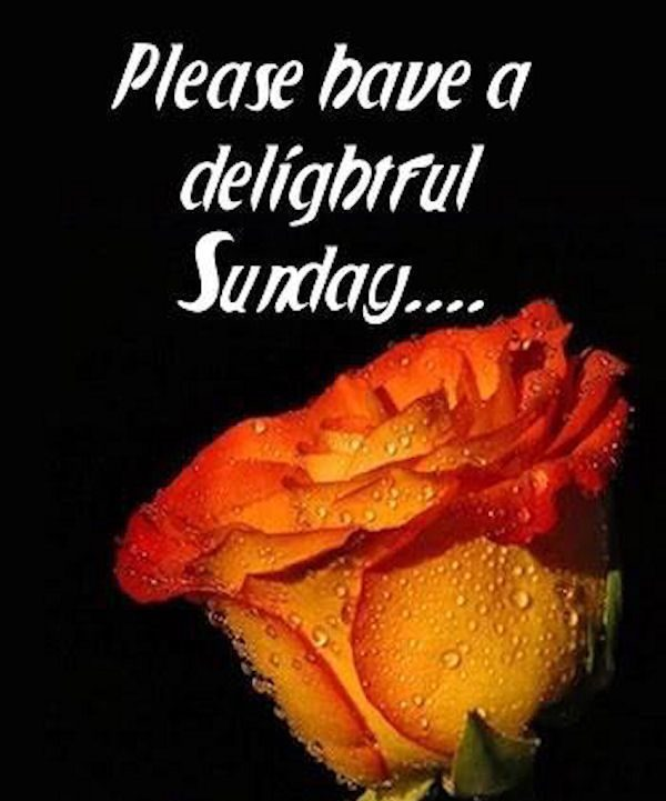 Please Have A Delightful Sunday