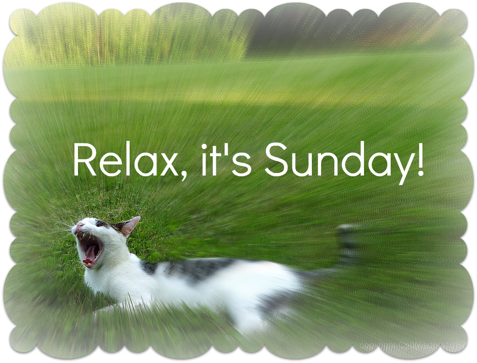 Relax Its Sunday Desicommentscom