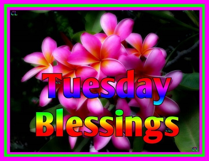 Tuesday Blessings Pic Desicommentscom