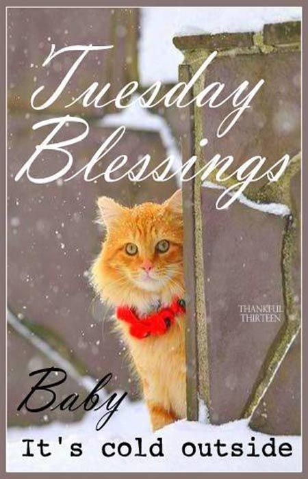 Tuesday blessings baby its cold outside