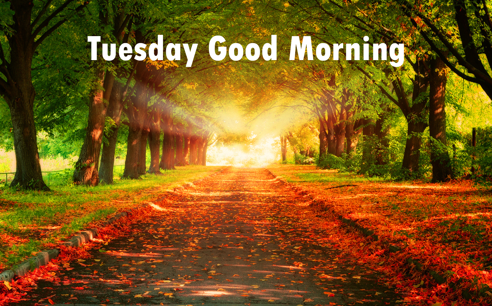 Tuesday Good Morning Wishes, Have great day ahead |Great Tuesday Morning Quotes