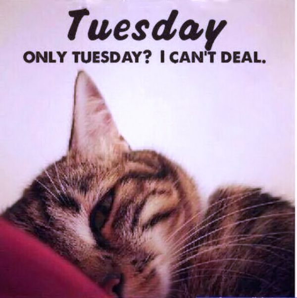 Tuesday Only Tuesday I Canot Deal