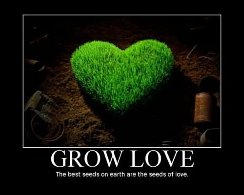 Picture: Grow Love The Best Seeds On Earth Are The Seeds Of Love Grass Heart Picture
