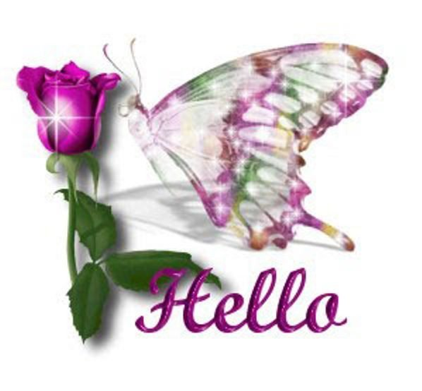 Hello Butterfly Pic