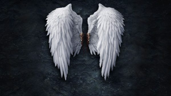 White Angel Wings Picture