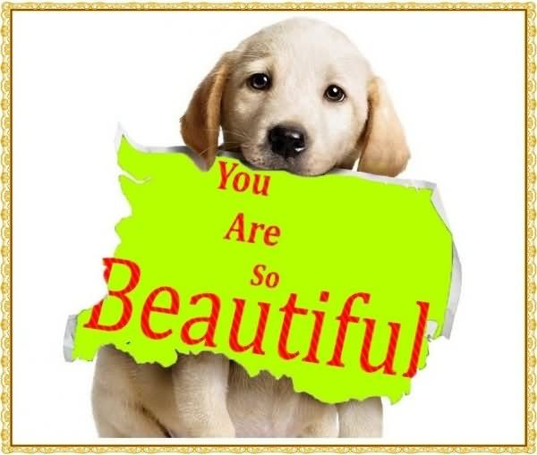 You Are So Beautiful Dog Graphic