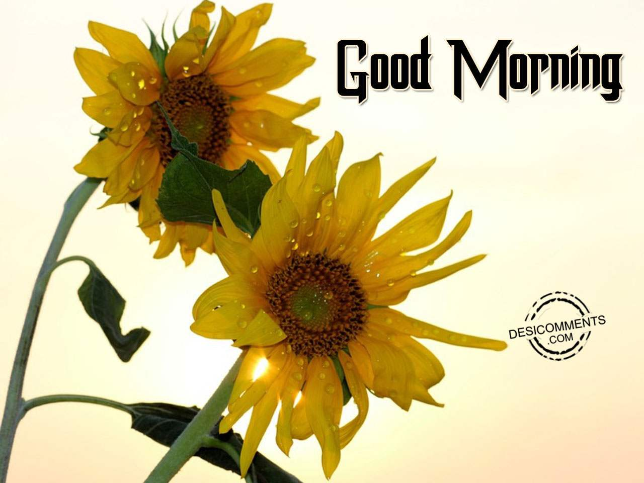 Good morning pictures images graphics page 10 for Good comments on pic