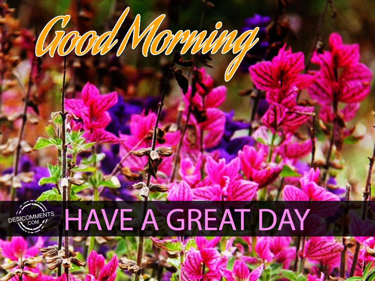 Have A Great Day – Good Morning - DesiComments.com Have A Good Day