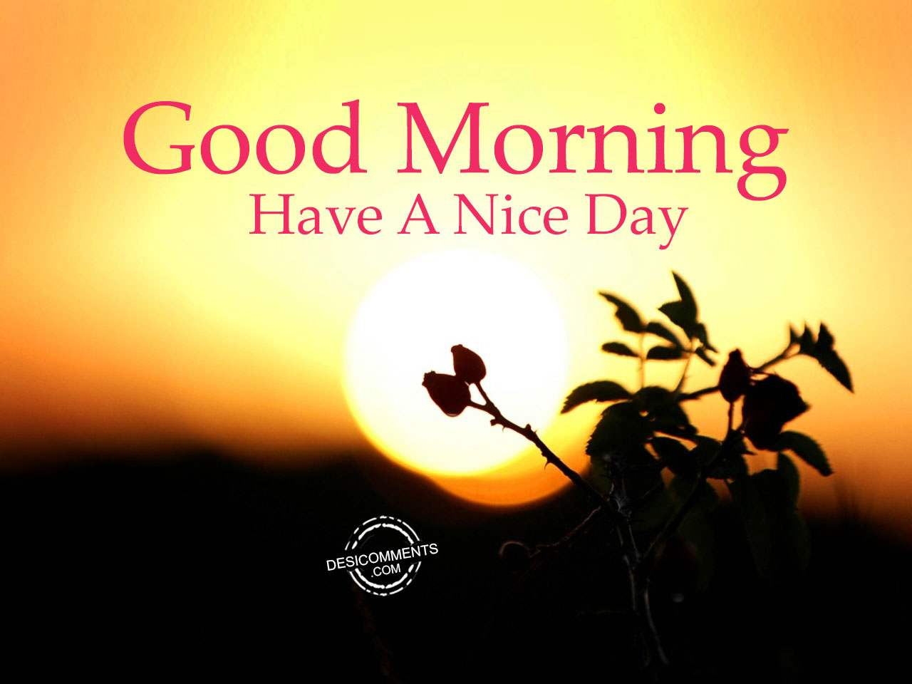 Have A Nice Day Good Morning Desicommentscom