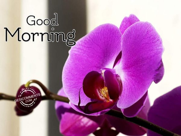 Have A Sweet And Good Day - Good Morning