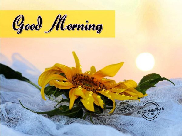 Image Of Good Morning - Have A Fabulous Day