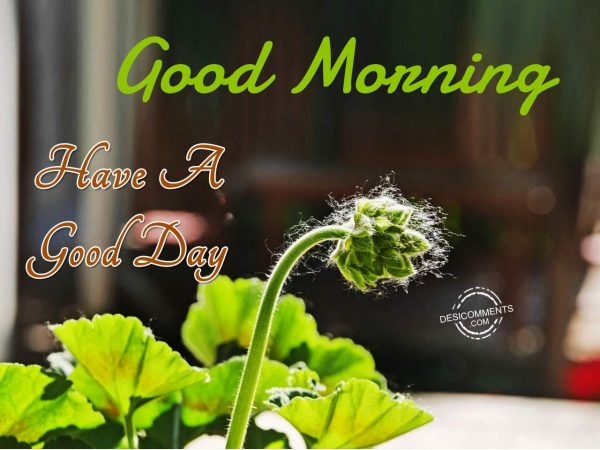 Image Of Good Morning - Have A Good Day