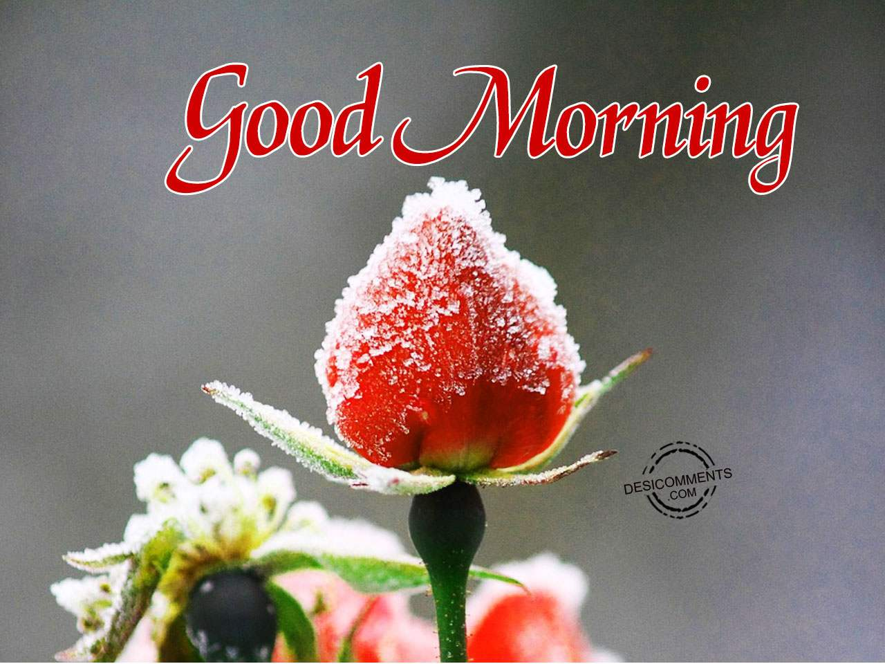 Image Of Good Morning Have A Great Day Desicomments Com