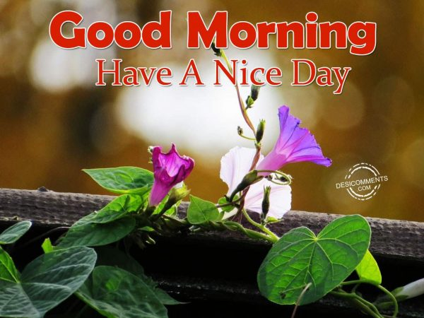 Image Of Have A Nice Day - Good Morning