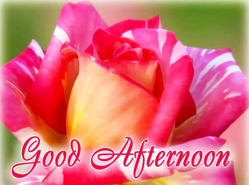 Good Afternoon Pictures Images Graphics Enchanting Gud Afternoon Image Download