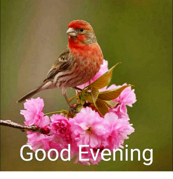 Picture: Good Evening With Bird