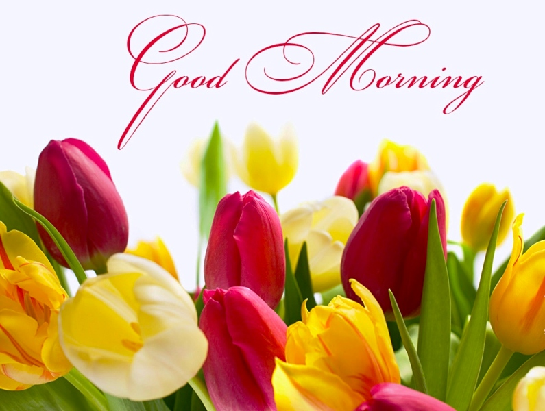 Good Morning With Colorful Flowers Desicomments Com
