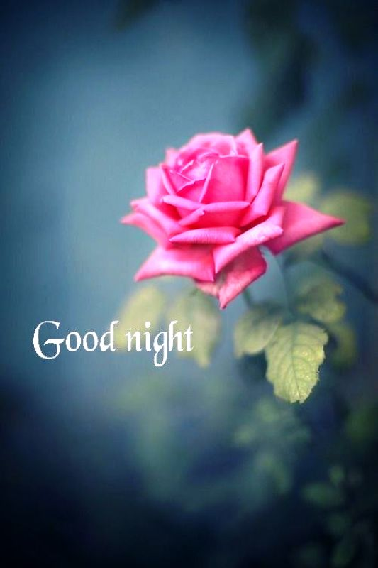 Good Night With Rose Desicommentscom