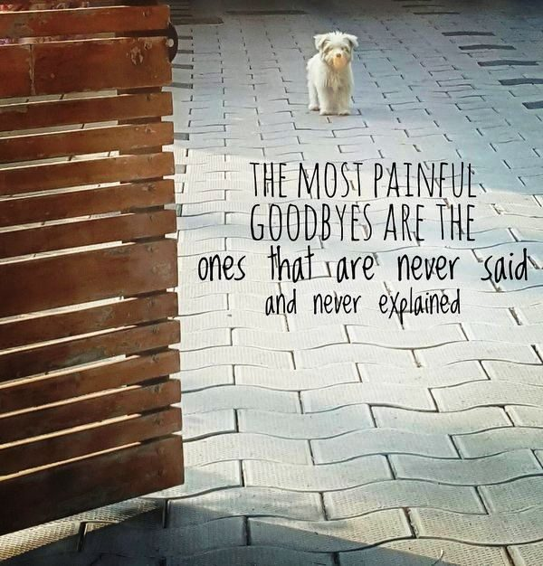 Picture: The Most Painful Goodbyes Are