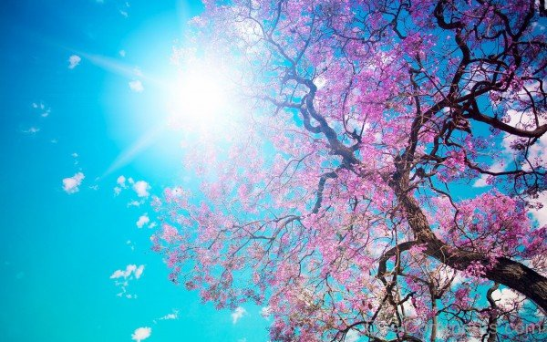 Amazing Picture Of  Spring