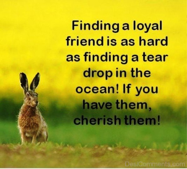 Finding A Loyal Friend Is As Hard As Finding A Tear  Drop In The Ocean-dc099055