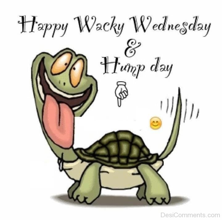 Happy Wacky Wednesday And Hump Day