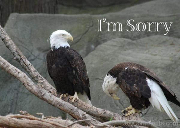 I Am Sorry Nice Picture.