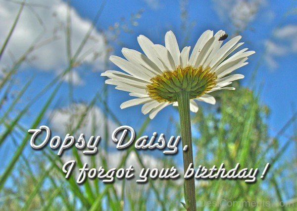 Ooops Daisy I Forgot Your Birthday