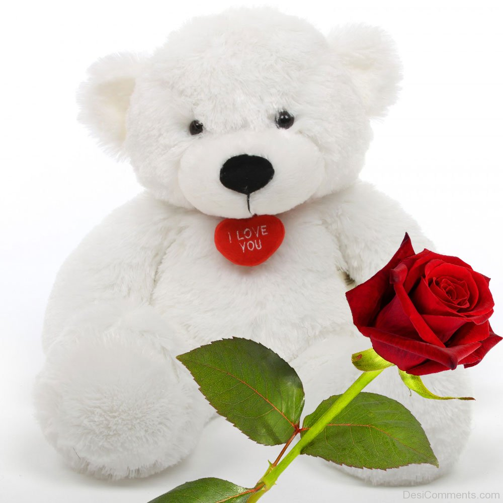 White Teddy Bear With Rose - DesiComments.com