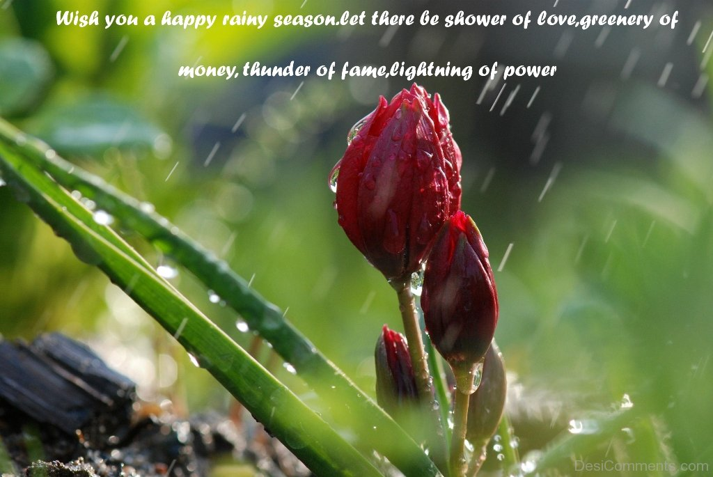 Wish You A Happy Rainy Season DC46