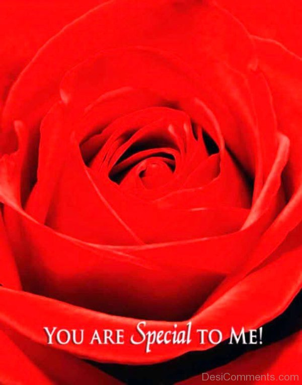 You Are Special To Me Red Rose Image